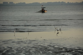 Egrets and local fishermen at work